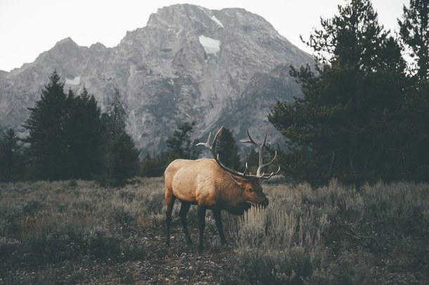 animal-cold-forest-moose-favim-com-3493042
