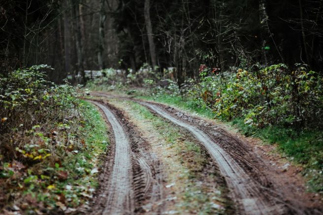 kaboompics_Forest track